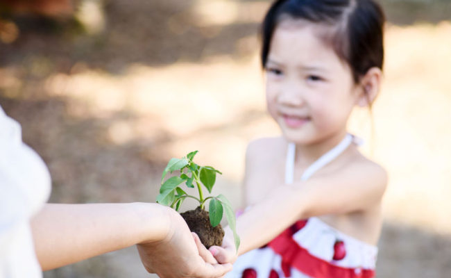 thin focus on hand, child sharing young seedling plant in hands to the older hand.